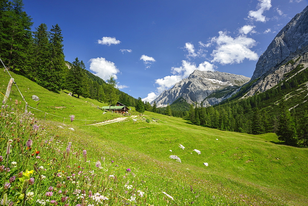 Flowering meadow with Lafatsch Niederleger hut and Speckkarspitze, Hinterau valley, Karwendel range, Tyrol, Austria