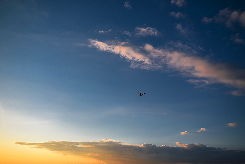 Gull in the evening sky at a Baltic sea beach, Dierhagen, Fischland-Darss-Zingst, Mecklenburg Vorpommern, Germany