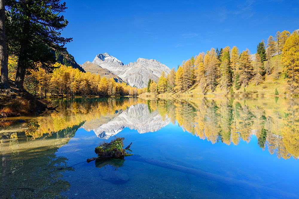 Golden larches at lake Palpuogna (1918 m) with Piz Ela (3180 m), Grisons, Switzerland