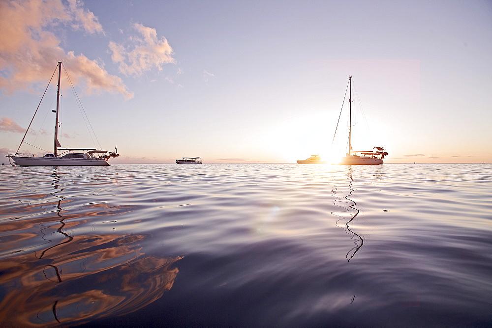 Sailboats in backlight, Dominica, Lesser Antilles, Caribbean