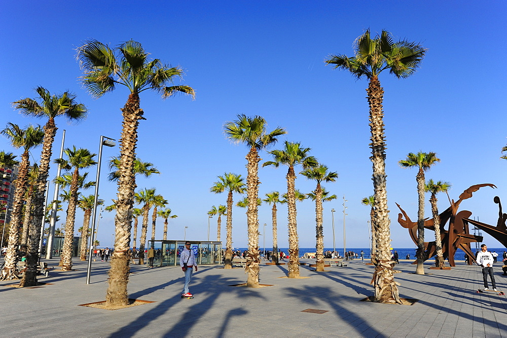 Placa del Mar, square with palm trees near Barceloneta beach, Mediterranean Sea, Barcelona, Catalonia, Spain