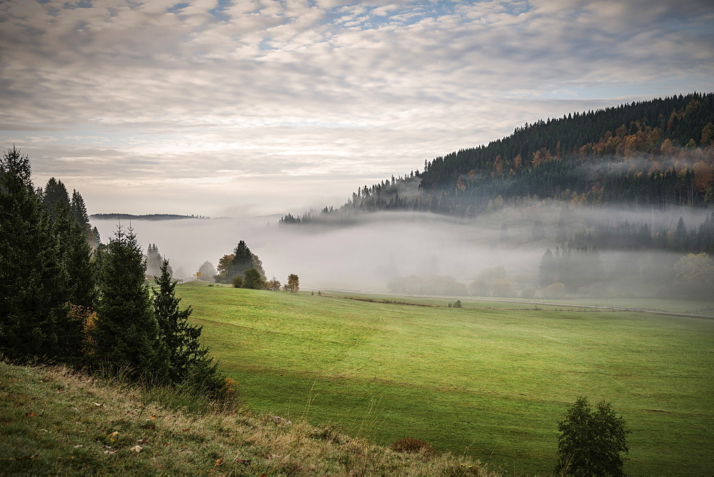 Mist rising through the valley close to Bernau im Schwarzwald, Black Forest, Baden-Wuerttemberg, Germany