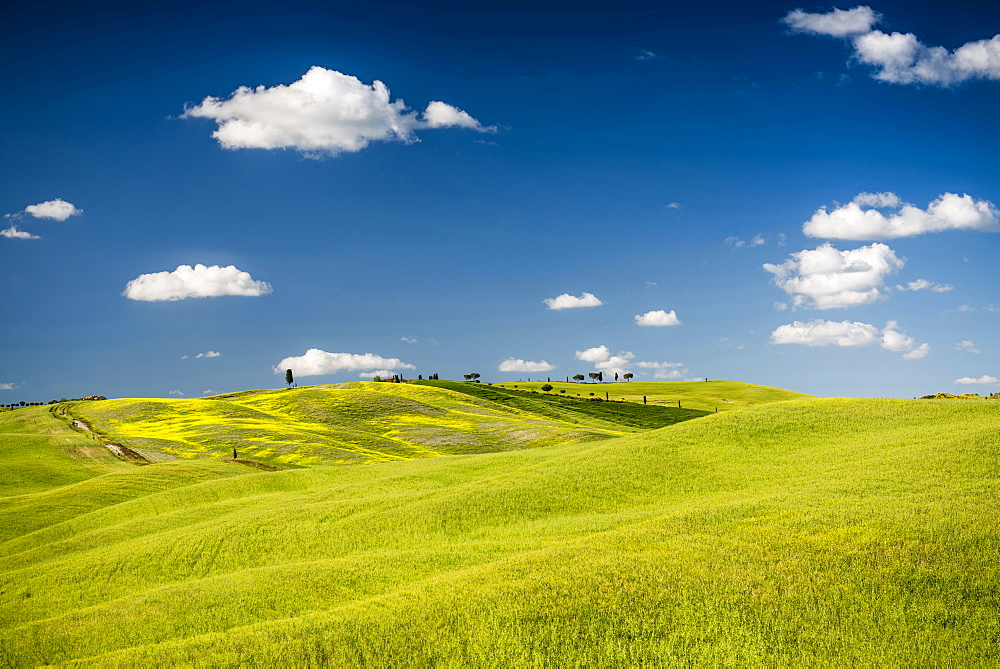 landscape, near San Quirico d`Orcia, Val d`Orcia, province of Siena, Tuscany, Italy, UNESCO World Heritage