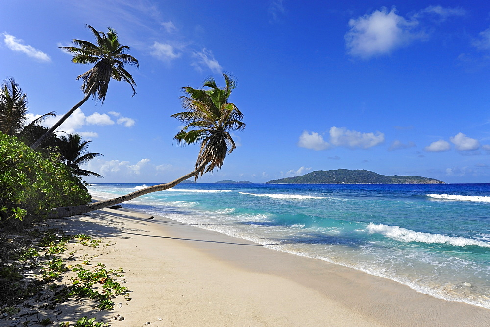 Palm trees on the beach of Anse Fourmis, La Digue Island, behind it Felicite Island, the Seychelles, Indian Ocean