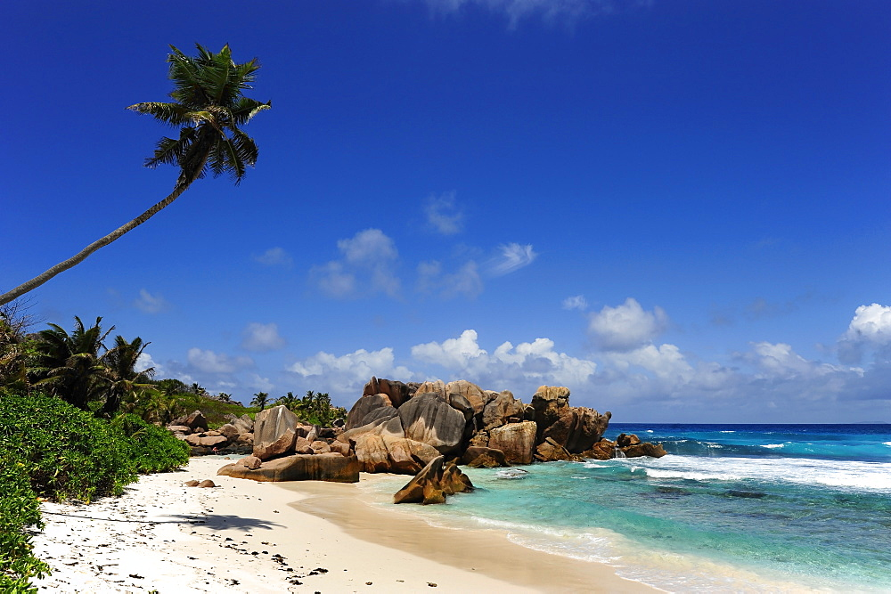 Washed out granite rocks and palm tree at beach Anse Cocos, La Digue Island, the Seychelles, Indian Ocean