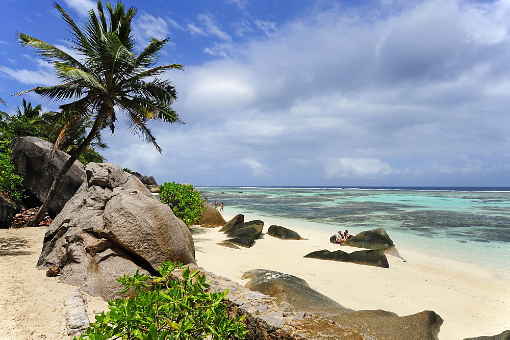 Palm tree on the beach Anse Source d'Argent, Union Estate national park, La Digue Island, the Seychelles, Indian Ocean