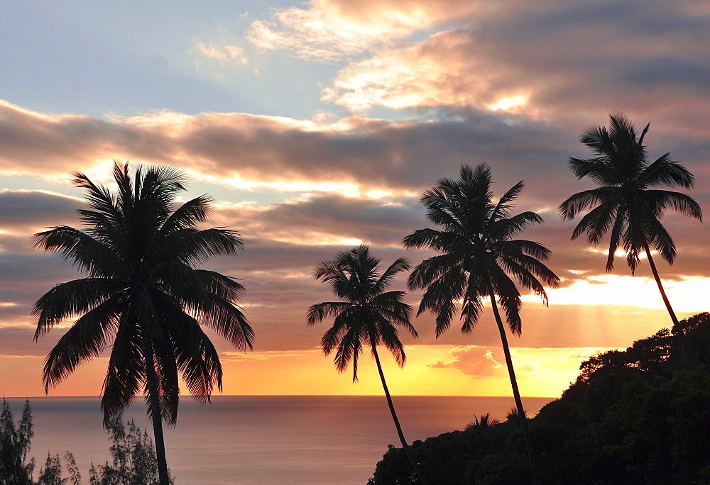 sunset with view to palm trees und Caribbean sea, Soufriere, St. Lucia, Saint Lucia, Lesser Antilles, West Indies, Windward Islands, Antilles, Caribbean, Central America - 1113-102307