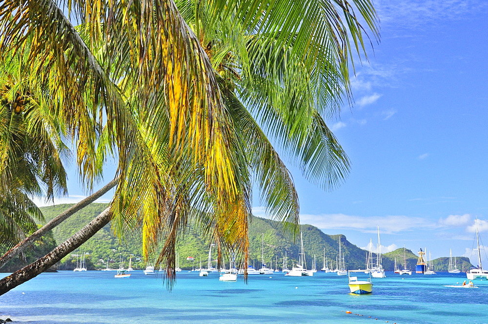 sailing ships, boats and palms in the harbour of Port Elizabeth, sea, Bequia island, St. Vincent, Saint Vincent and the Grenadines, Lesser Antilles, West Indies, Windward Islands, Antilles, Caribbean, Central America