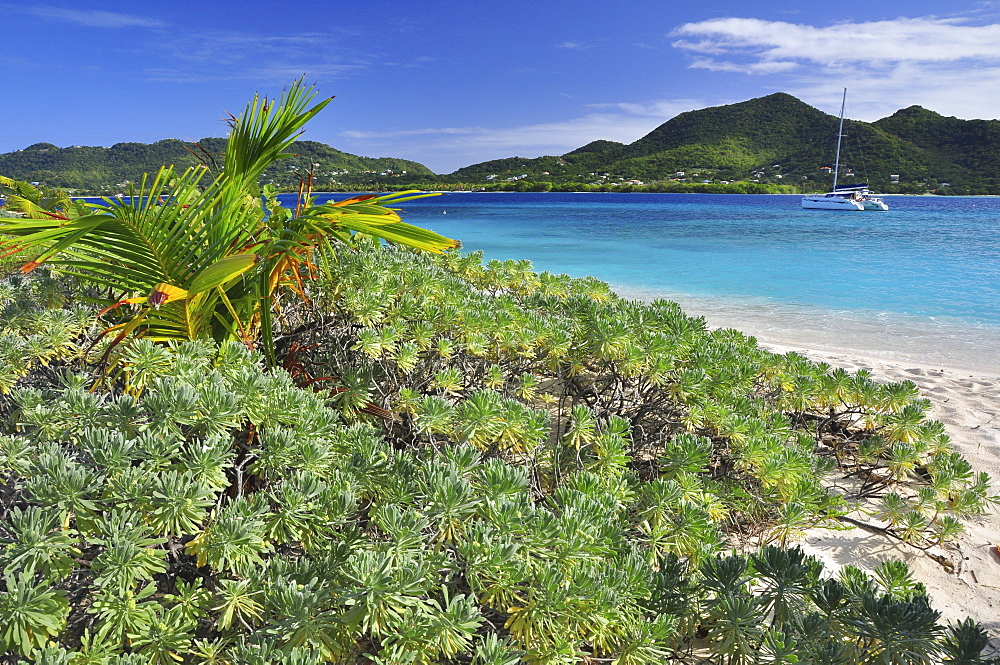 tropical beach with sailing ship, sea, Sandy Island, Carriacou, Grenada, Lesser Antilles, West Indies, Windward Islands, Antilles, Caribbean, Central America
