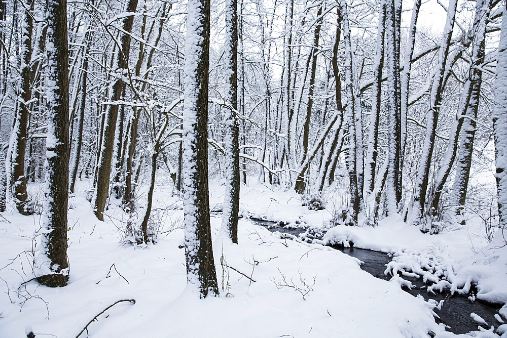 Winter wonderland landscape with snow in Kellerwald forest near Duelfershof, Loehlbach, near Bad Wildungen, Hesse, Germany, Europe