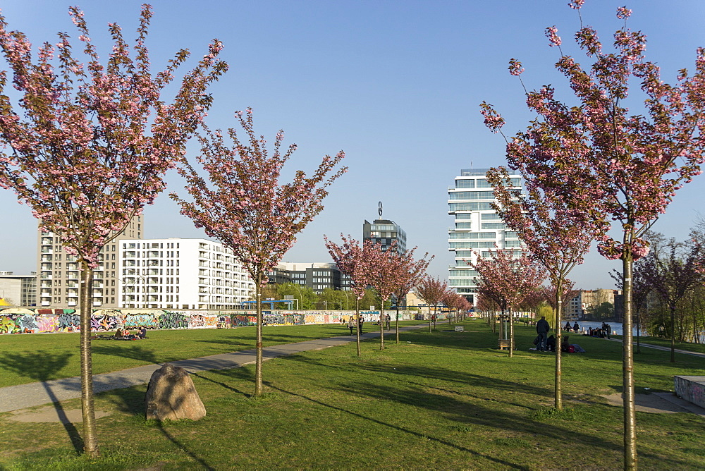 East Side Park with parts of the Berlin Wall, East Side Gallery and Skyscraper Living Levels in the background, Cherry Blossom in the Foreground, Friedrichshain, Berlin, Germany