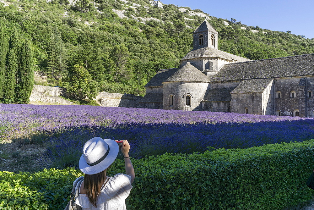 lavender field in front of the Abbaye de Senanque abbey, near Gordes, the Vaucluse, Provence-Alpes-Cote d'Azur, France