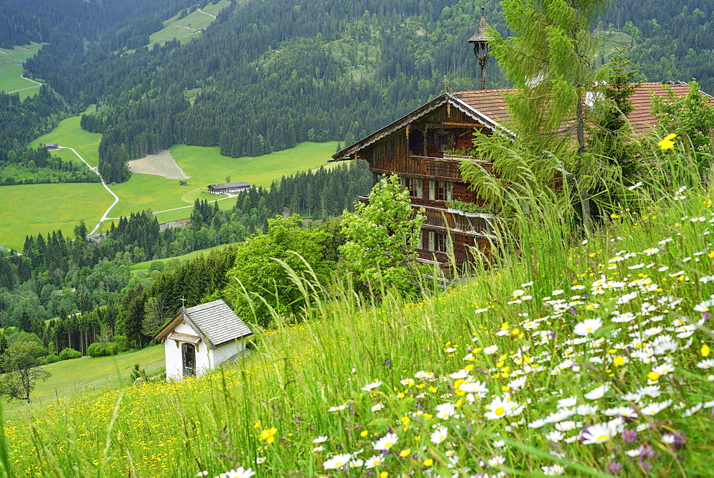 View over a flower meadow to an alpine farmhouse, Penningberg, Hopfgarten im Brixental, Kitzbuehel Alps, Tyrol, Austria - 1113-102560