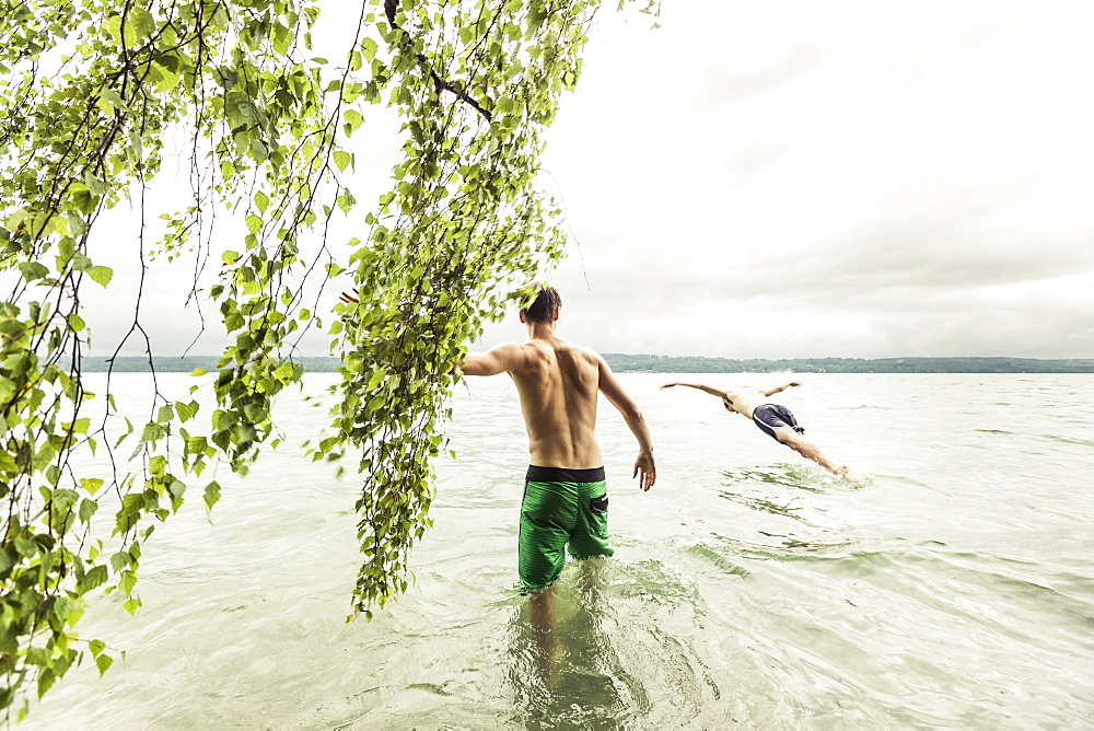 two young men going swimming in Lake Starnberg near a birch tree, Berg, Upper Bavaria, Germany