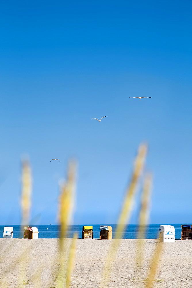 Beach with beach chairs, Heiligenhafen, Baltic Coast, Schleswig-Holstein, Germany