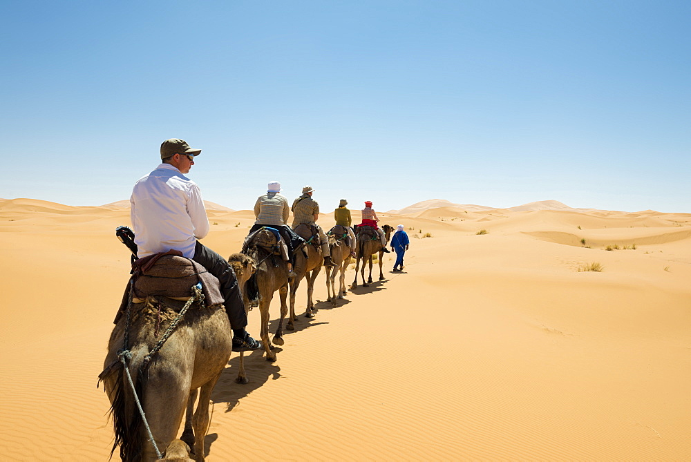 group of tourists riding dromedaries in the sand dunes, Erg Chebbi, Sahara Desert, Morocco, Africa - 1113-102636