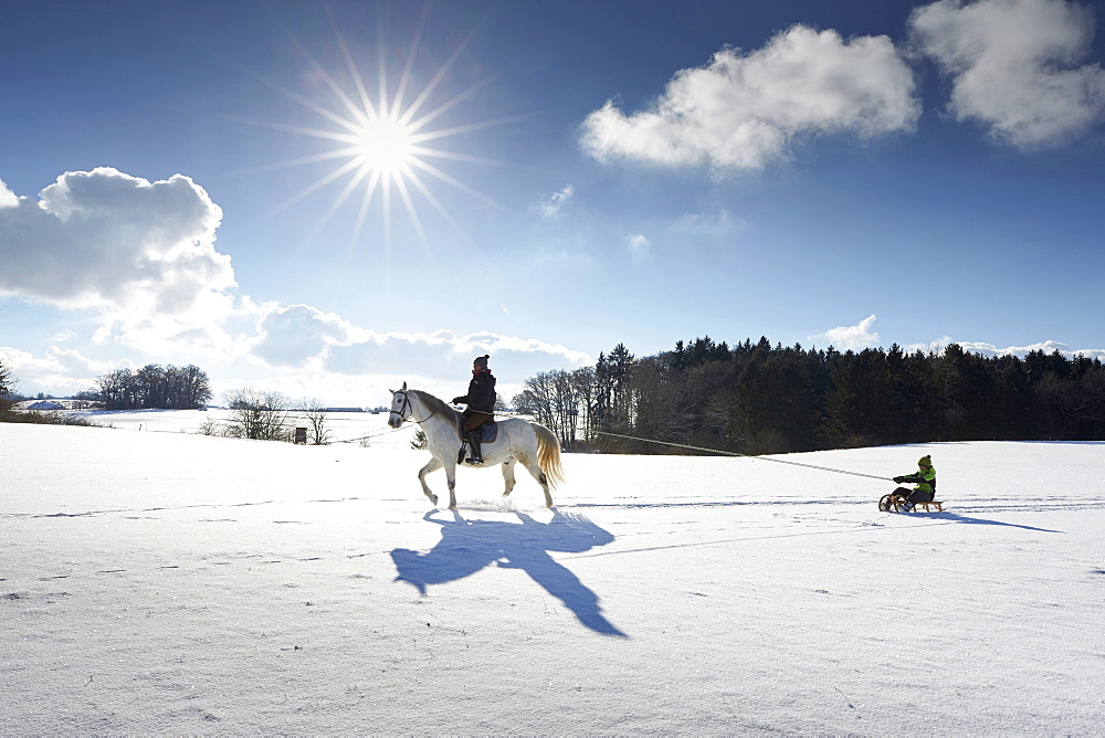 Mother on horse pulling children on sledge, Buchensee, Muensing, Bavaria Germany - 1113-102775