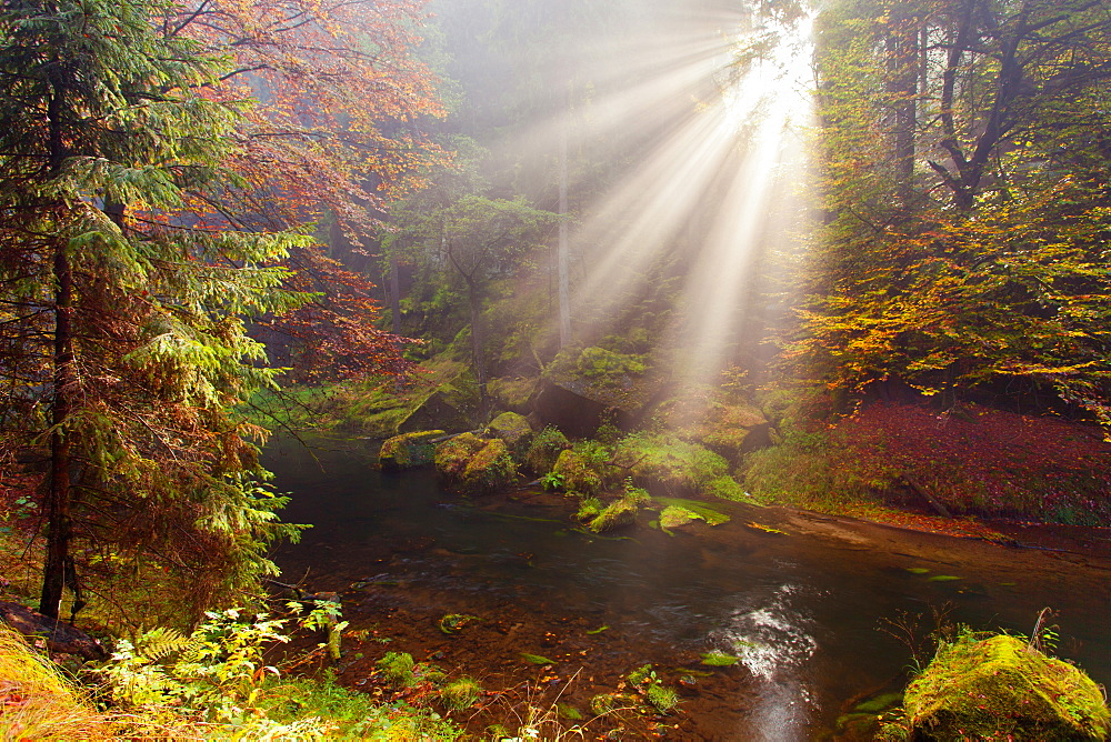 Sun, Sunbeams, Forest, Autumn, Deciduous, Czech Switzerland, Czech Republic