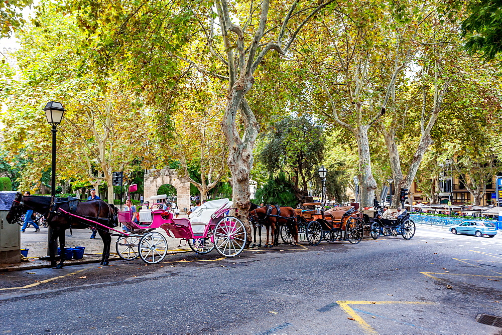 Horse carriages in the old town of Palma, historic city centre, Ciutat Antiga, Palma de Mallorca, Majorca, Balearic Islands, Mediterranean Sea, Spain, Europe