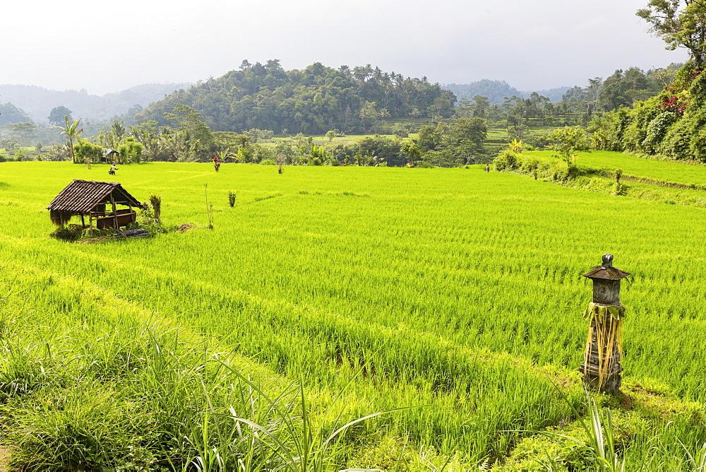 Shrine between paddy fields, Iseh, Sidemen, Bali, Indonesia