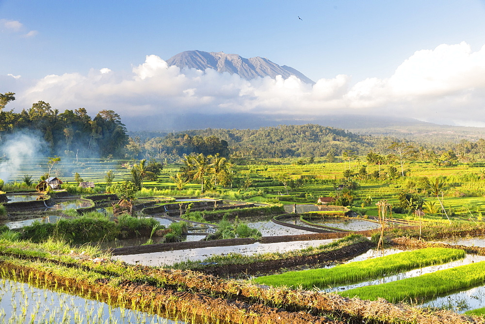 Tropical scenery with paddy fields, Gunung Agung, near Sidemen, Bali, Indonesia - 1113-102939