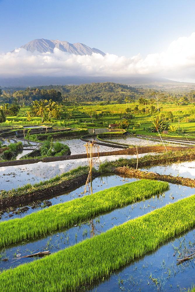Tropical scenery with paddy fields, Gunung Agung, near Sidemen, Bali, Indonesia