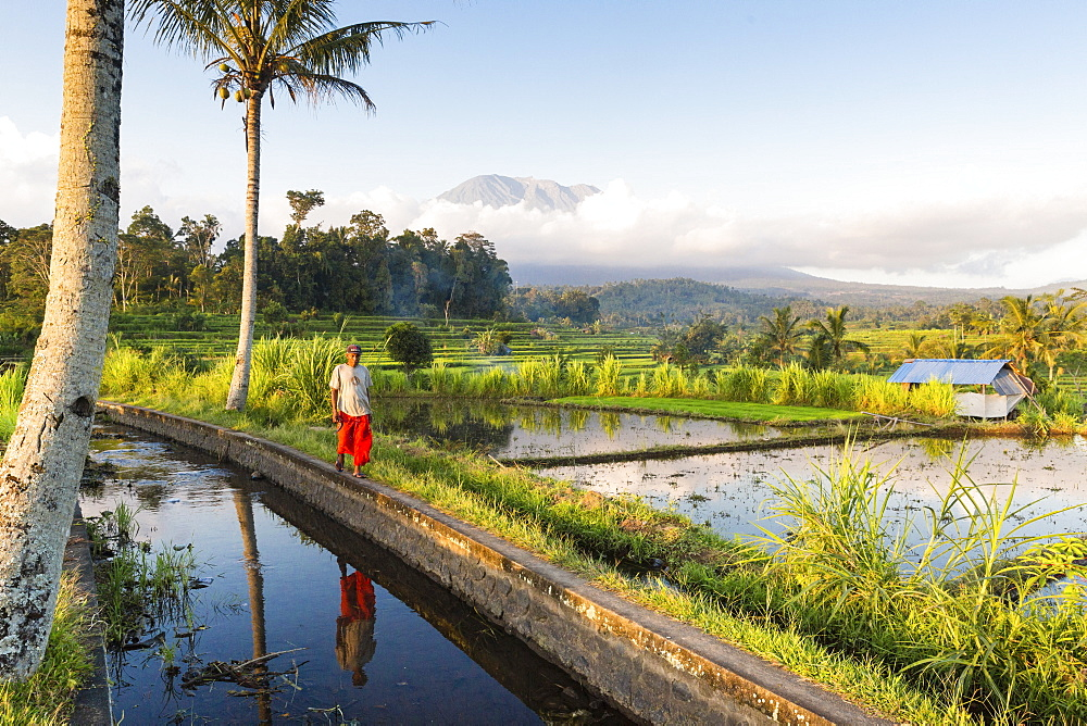 Tropical scenery with paddy fields, Gunung Agung, near Sidemen, Bali, Indonesia - 1113-102941