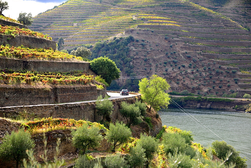 winefields between Peso Regua and Pinhao, Douro valley, Norte, Portugal