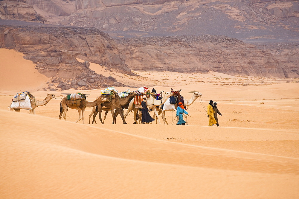 Camel Caravan in the libyan desert, Dromedaries, Camelus dromedarius, Akakus mountains, Libya, Sahara, North Africa