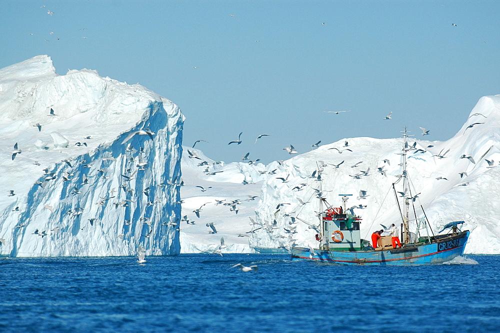 Fishing boat amongst icebergs, Ilulissat, Jakobshavn, Kaalalit Nunaat, Greenland - 1113-104059