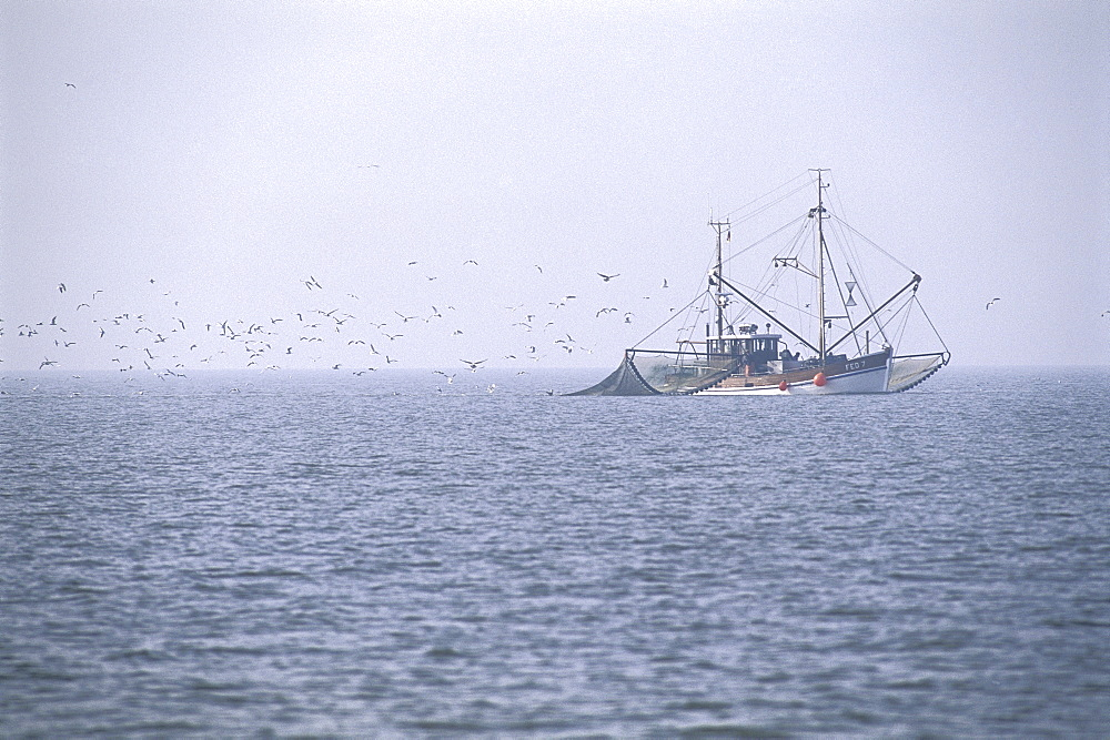 Shrimp Boat in Wadden Sea, Germany - 1113-104208