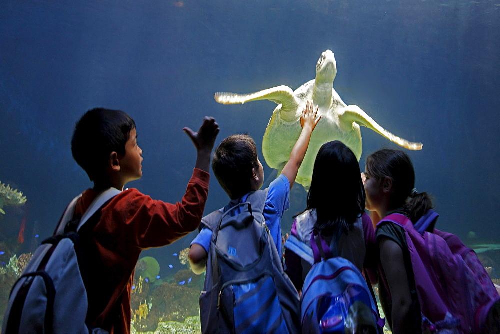 Sea turtle at Aquarium in Vancouver City in Stanley Park, school children, Canada, North America