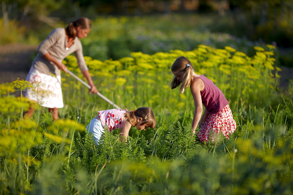 Woman and girls (6-9 years) in a vegetable garden, Lower Saxony, Germany