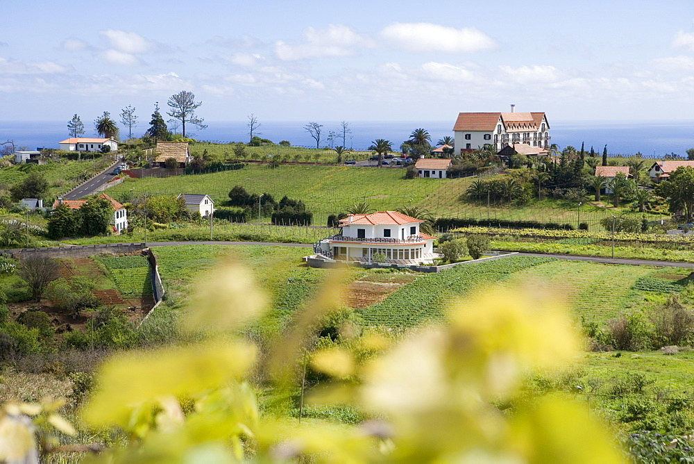 Vineyard and Quinta do Furao Hotel, Santana, Madeira, Portugal