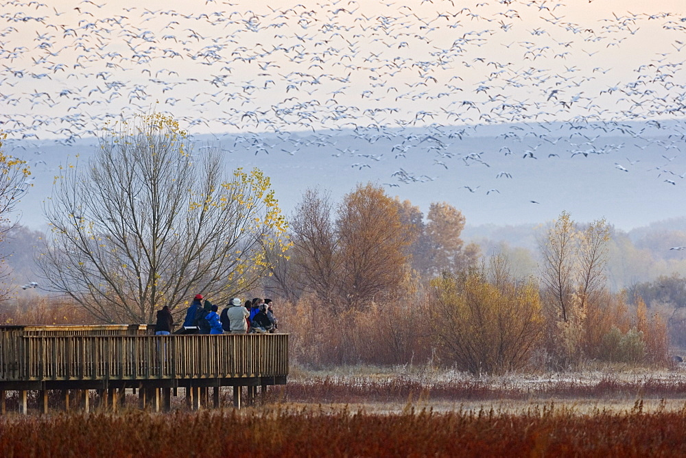 tourists on platform in Bosque del Apache Wildlife Refuge, Snow Geese wintering, New Mexico, USA