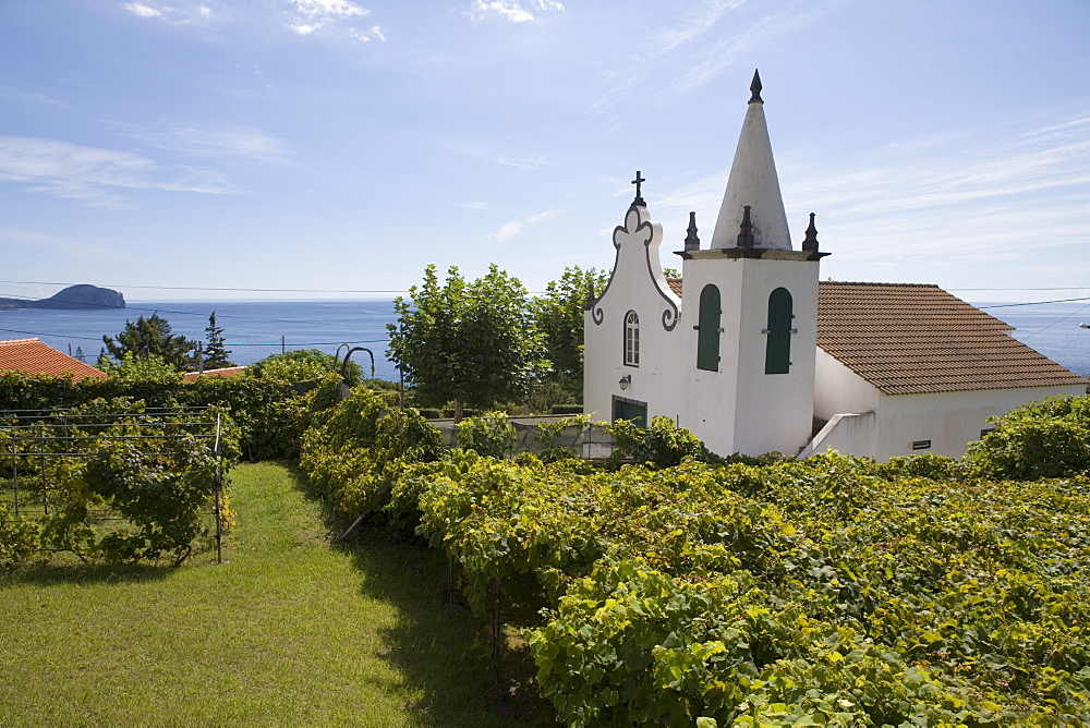 Grape vines and church, Varadouro, Faial Island, Azores, Portugal, Europe