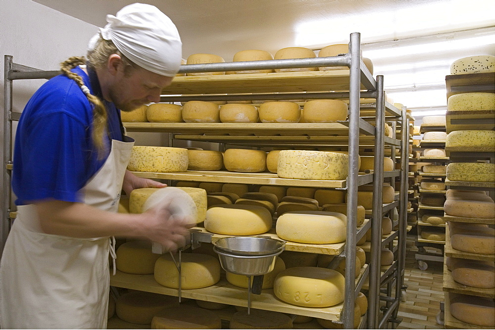 cheese production, Adolphshof near Lehrte, Hannover, Lower Saxony, Germany