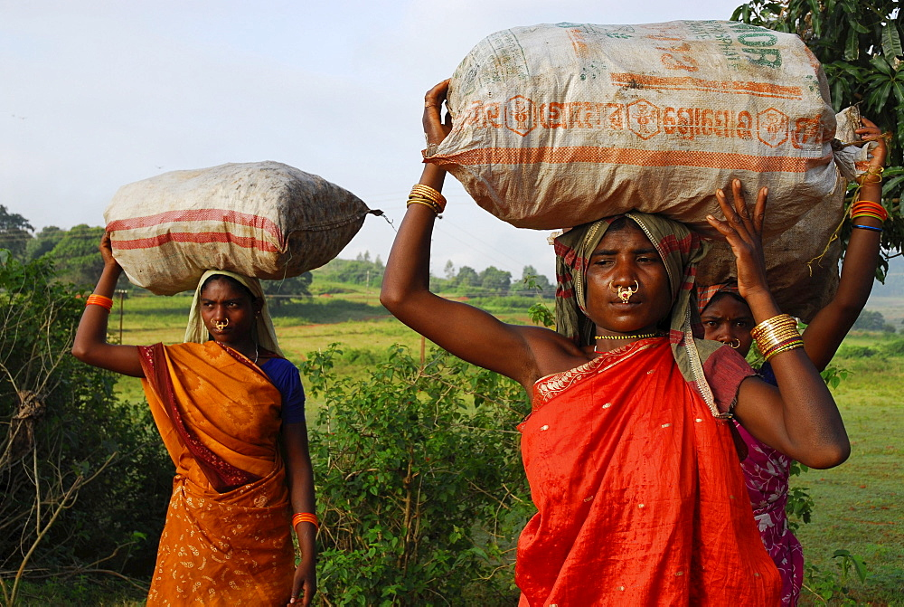 Women of Mali tribe on their way to market, Tribal region in Koraput district in southern Orissa, India, Asia
