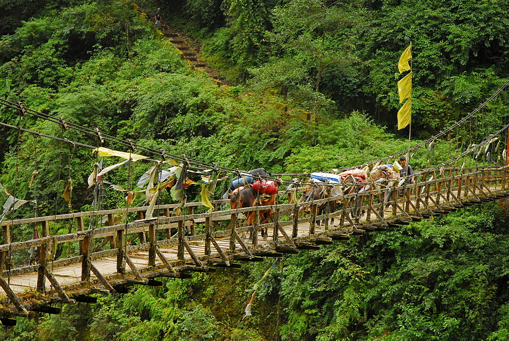 Suspension bridge with prayer flags, Trek towards Gocha La in Kangchenjunga region, Sikkim, Himalaya, Northern India, Asia