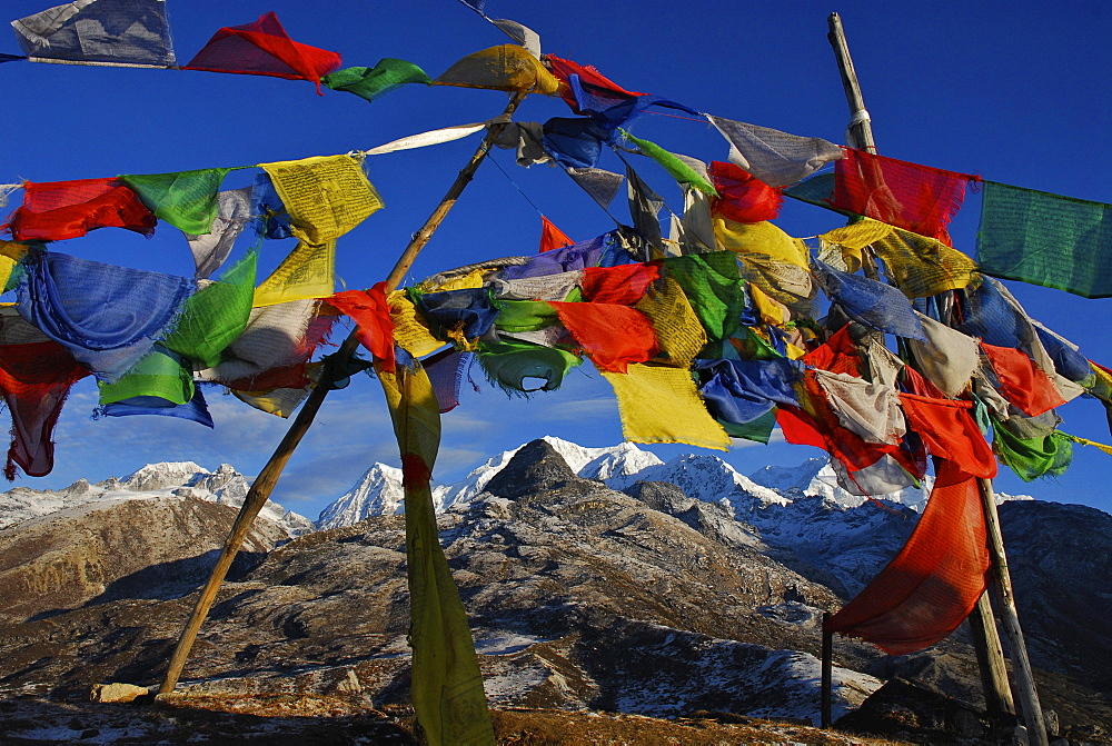 Colourful prayer flags in front of blue sky at Dzongri La, Trek towards Gocha La in Kangchenjunga region, Sikkim, Himalaya, Northern India, Asia