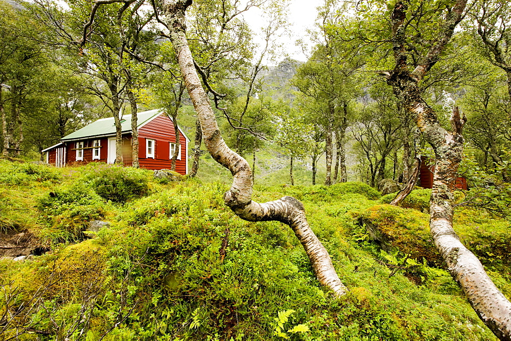 Red wooden house in a forest of birches at lake Fynderdalsvatnet, Folgefonn peninsula, Kvinnherad, Hordaland, Norway, Scandinavia, Europe