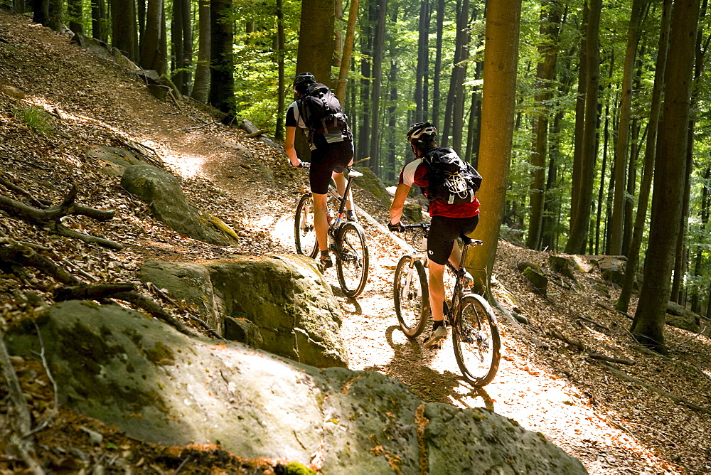 Two mountain bikers passing forest trail, Palatine Forest, Rhineland-Palentine, Germany