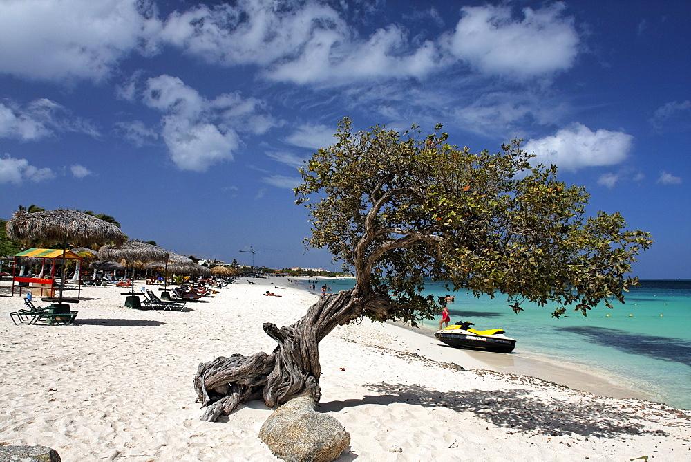 West Indies, Aruba, Dibi Divi Tree, Eagle Beach