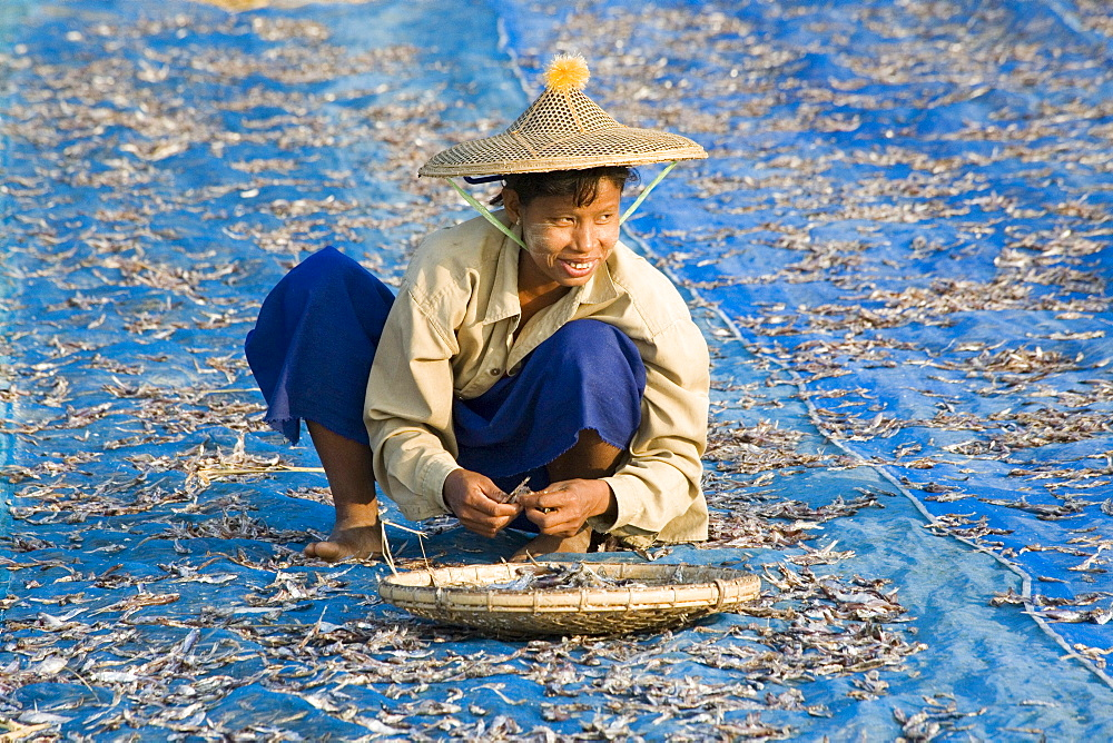 Woman drying fish near Ngapali Beach, Gulf of Bengal, Rakhine State, Myanmar, Burma