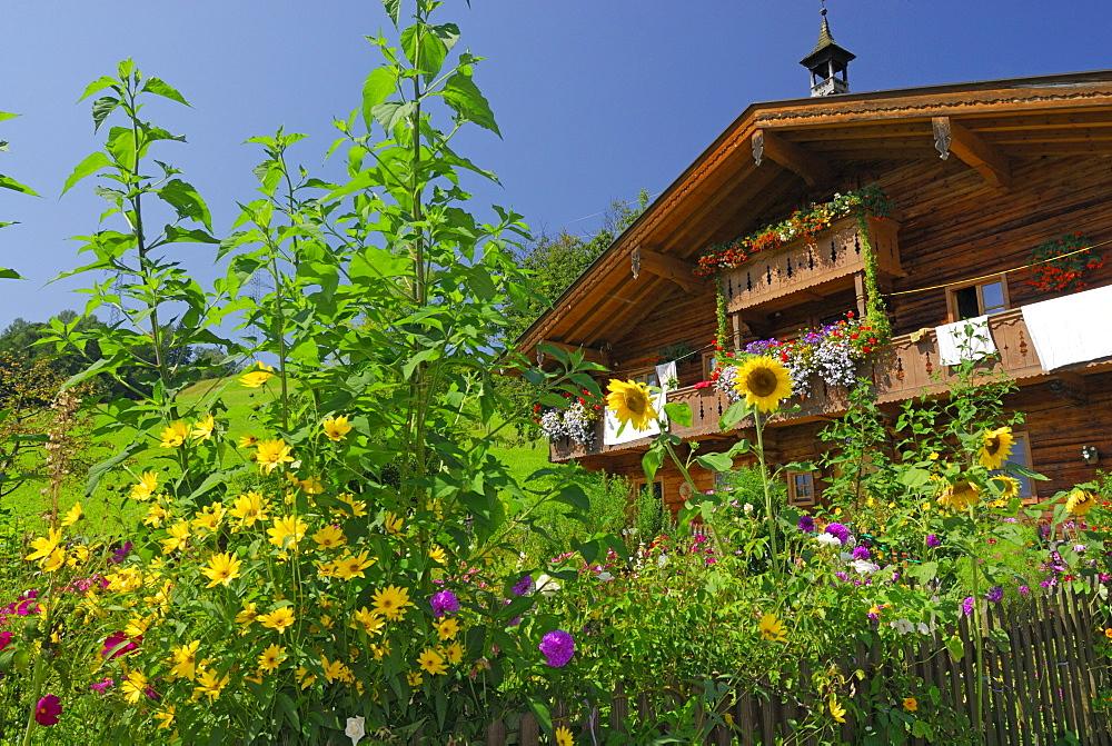 garden and farmhouse, Maria Alm, Steinernes Meer range, Berchtesgaden range, Salzburg, Austria