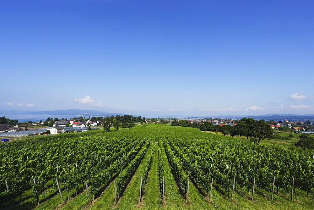 View over vineyard, Reichenau, Baden-Wurttemberg, Germany