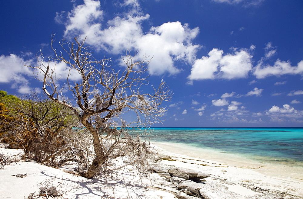 Beach and Lagoon of Bikini, Marshall Islands, Bikini Atoll, Micronesia, Pacific Ocean