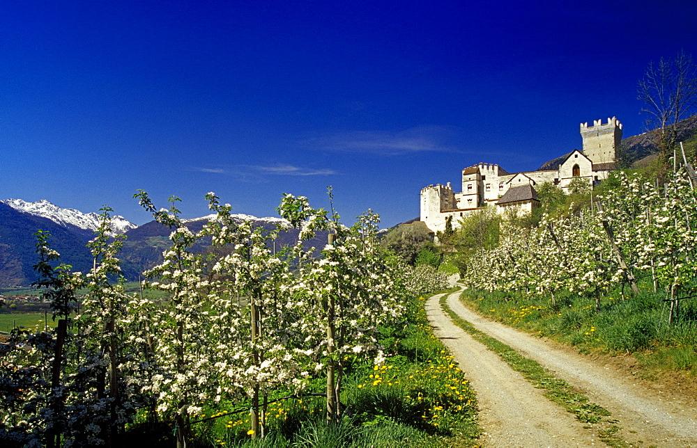 Apple blossom, Castello Coira, Churburg castle in the background, near Sluderno, Val Venosta, Dolomite Alps, South Tyrol, Italy