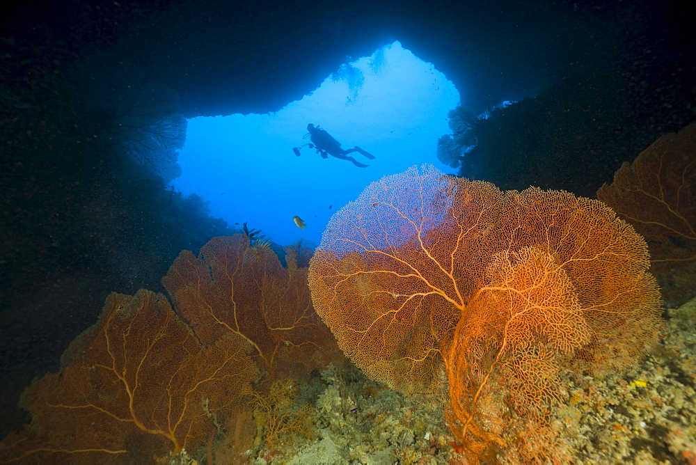 Diver in Siaes Tunnel Cave, Siaes Tunnel, Micronesia, Palau