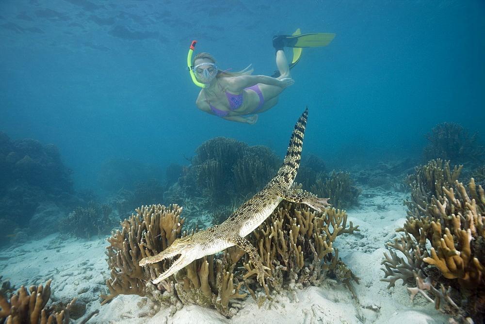 Skin Diver meets Saltwater Crocodile, Crocodylus porosus, Micronesia, Palau
